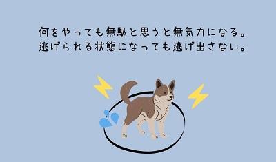 学習性無力感の犬